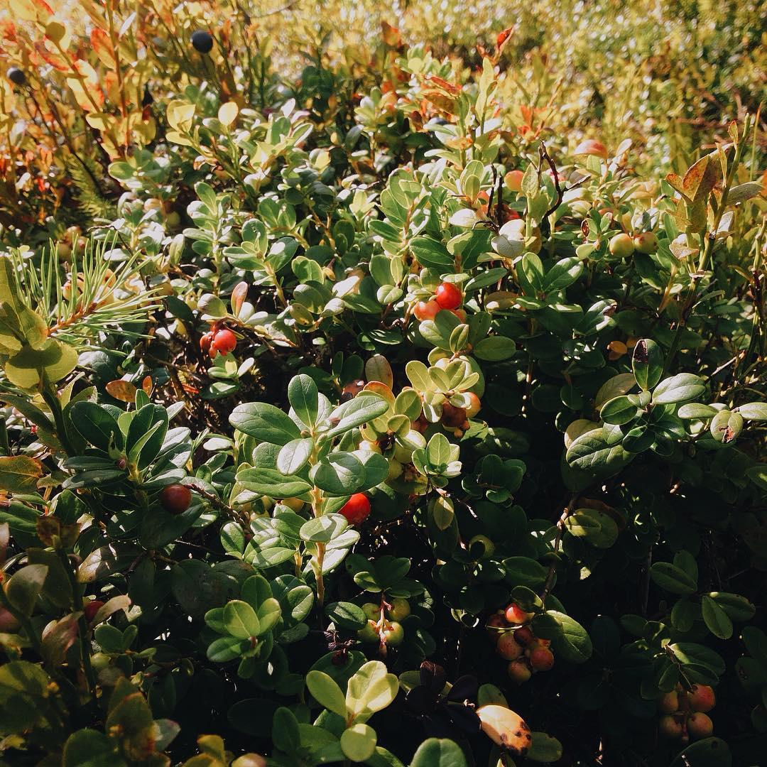 В Питере, как и в лен. области отличная погода 🏻! Самое время поехать загород и немного отдохнуть! Парк активного отдыха GREENVALD Парк Скандинавия  вам в этом с удовольствием поможет🏻🏻🏻 Супер предложение, грибы и ягоды при посещении парка бесплатныКоординаты: 60.287649, 29.744828
