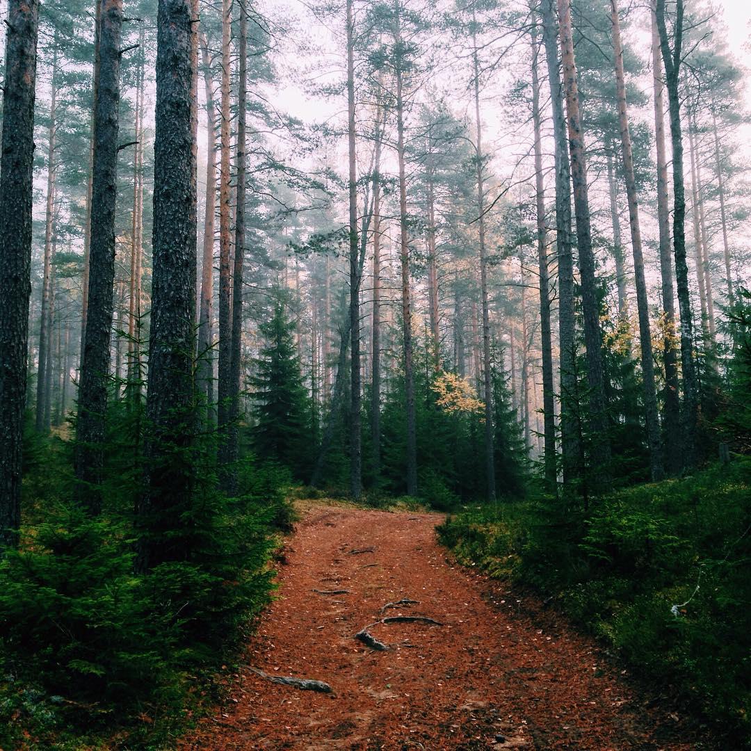 Сегодня в GREENVALD Парк был туман, а потом вышло солнце! Идеальная погода для ваших фотосессий в норвежской атмосфере Координаты: 60.287649, 29.744828