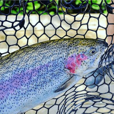 """Рыбалка - тариф """"Дневной"""""""